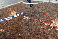 D�siv� lebka, kosti a vnit�nosti: Vyplavilo jezero mrtvolu lochnessk� p��ery?