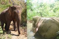 Srdceryvn� sn�mek: Pytl�ci zabili a rozkuchali slona, kv�li ��nsk� medic�n�