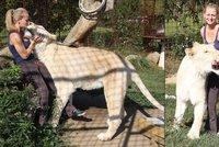 Netradi�n� mazl��ek: M� dva metry a v�� 230 kilo. Angie po zahrad� b�h� lev