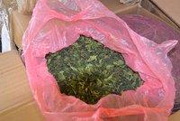 Celníci na letišti odhalili 92 kilo »žvýkací drogy«: Sušená kata putovala z Nairobi do Prahy