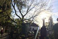 Vánoční stromek na hrob či chvojí: Pražané si mohou objednat výzdobu rovu