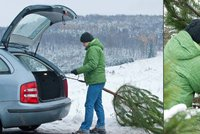 Za krádež stromečku pokuta 15 tisíc! Z lesů před Vánoci mizí stovky smrčků