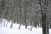Ve Stromovce kácejí stromy: Mizí poškozené a nebezpečné porosty