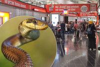 Čecha zadrželi na vídeňském letišti: V kufru pašoval 80 plazů