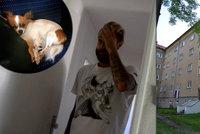 Známý fotbalista prý napadl přítelkyni a vyhodil psa z okna: Čivava nepřežila
