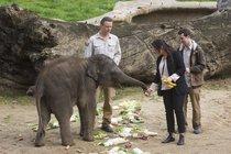 Slůněti Maxovi z pražské zoo je rok: Dárek z proutí mu  sebral kámoš Rudi!