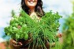 Manuál pro jarní bylinky: Na co, kdy a kterou použít