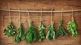 Je nejvyšší čas založit bylinkovou zahrádku!