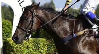 Tragédie v Chuchli. Vítězný kůň si v cíli zranil nohu a museli ho utratit