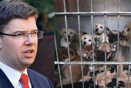 TOP 09 navrhuje zpřísnění trestů za týrání zvířat, nově bude možné stíhat…