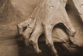 Mumie z Guanajuatu jsou jednou z nejděsivějších turistických atrakcí na světě