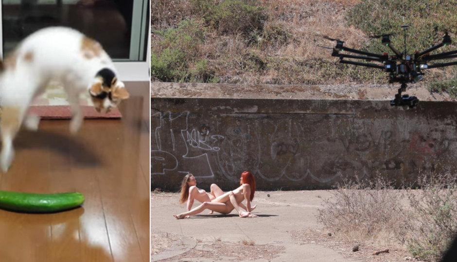 Nový hit: Porno z dronu! A proč se kočky lekají okurek?