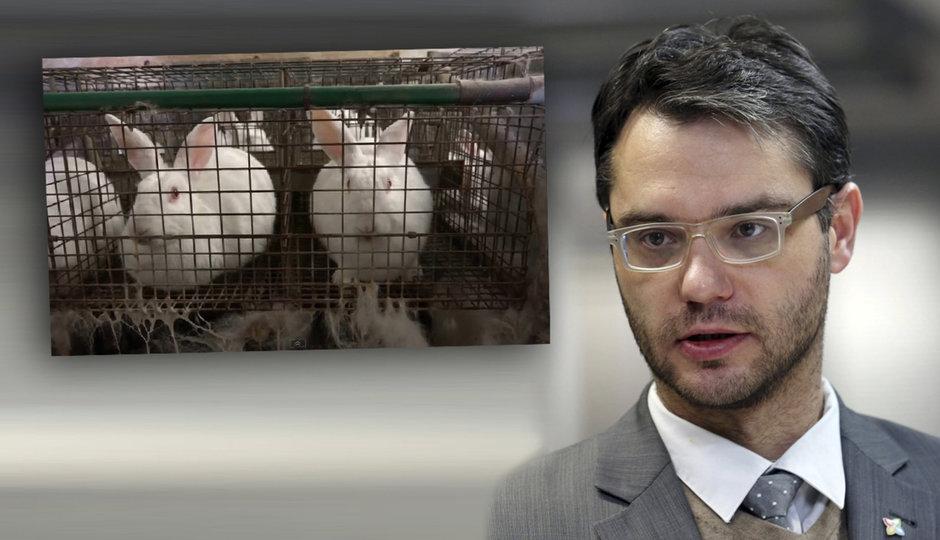 Skončí české chovy králíků? Pusťte je z klecí, naléhá europoslanec Polčák