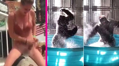 Dívka při rajtování na býku ji zradily kalhotky. A gorilí samec, co tančí jako ve Flashdance!