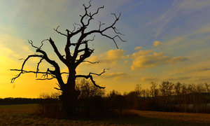 Fantastické záběry z dronu: Památný strom z Jabkenické obory