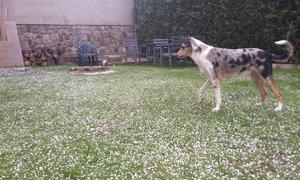 Počasí pod psa: Aprílový sníh rozladil i domácího mazlíčka