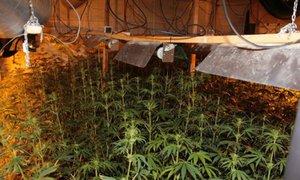 Policie objevila v Ústí obří pěstírnu marihuany: 6 zatčených