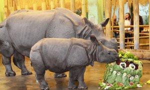 Křest nosorožčí samičky Růženky z Plzně. Přibrala už čtvrt tuny