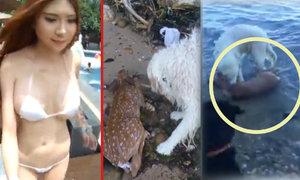 Holka si vytiskla vlastní 3D bikiny a pes hrdina: Zachránil z vody koloucha!