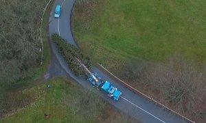 Vánoční strom pro Prahu: Takhle se stěhoval z křivoklátských lesů