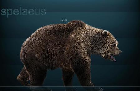 Medvěd jeskynní (Ursus spelaeus)