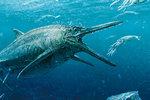 """Rekonstrukce čtyřmetrového ichtyosaura """"Storr Loch Monster"""" z ostrova Skye. Kromě ryb se živil i hlavonožci"""