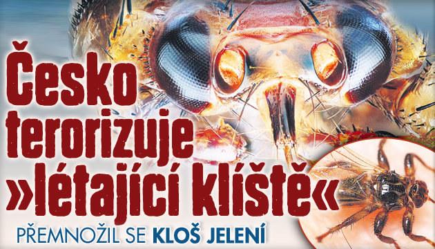 Česko terorizuje »létající klíště«