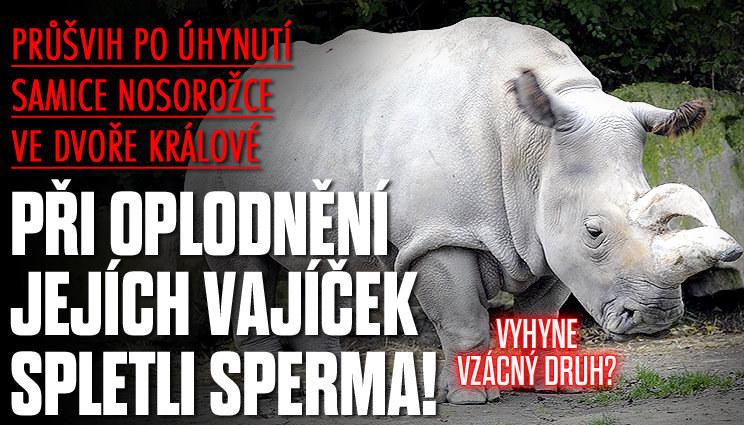 Vyhyne vzácný nosorožec?