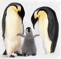Tučňák císařský (Aptenodytes forsteri)