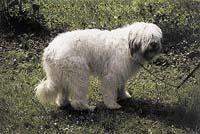 Jihoruský pastevecký pes