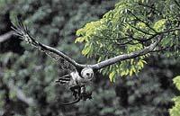 Harpyje - zpola ženy, zpola ptáci?