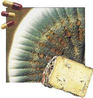 Plísně rodu Penicillium se používají k výrobě léků a v potravinářském průmyslu