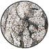 Lepraria incana (7x)