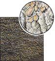 Lecanora conizaeoides (skut. velikost)