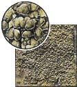 Hypocenomyce scalaris (skut. velikost)