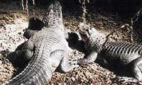 Do parku za krokodýly
