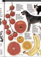 Šlechtěním se podařilo získat odlišné varianty kulturních plodin (i zvířat)