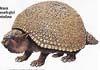 prehistorický obří pásovec Glyptodon / V dobách, kdy byla Jižní Amerika ostrovem, se tady vyvinula řada originálních tvorů včetně pásovců