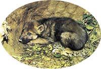 Novorozená vlčata jsou slepá a váží asi 500 g, brzy však prohlédnou a rychle rostou