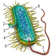 Stavba bakteriální buňky