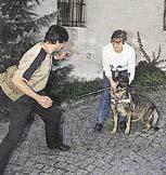 I ten nejklidnější pes se dá vyprovokovat k útoku.
