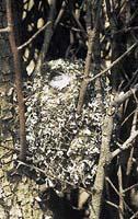 Hnízdo je malou pevností, chránící mláďata před nebezpečím
