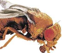 Malá velká moucha - OCTOMILKA