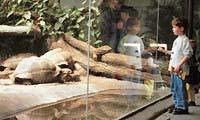V moderním pavilonu želv dělí návštěvníky od vzácných chovanců (želv galapážských) jen sklo