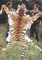 Tygří kůže zabavená pašerákům bude spálena