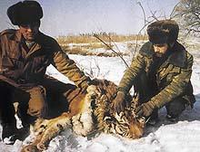 Šéf tygří jednotky Vladimír Dukov (vlevo), měří se svým kolegou zastřeleného tygra
