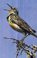 Ptačí zpěv - 45 dB