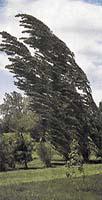 Stromy ve vichřici  70 dB