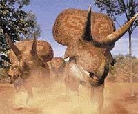 Zuniceratops je nejstarší dosud známý ceratopsid, objeven byl teprve v roce 1997