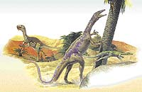 Ornitholestes, Coelophysis, Compsognathus  - Coelurosauři se pohybovali rychlým během po zadních končetinách a pravděpodobně se z nich vyvinuli ptáci